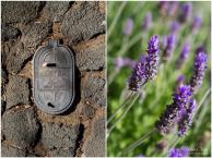 Water meter and Lavender flowers